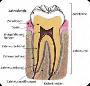 Das Innere des Zahns